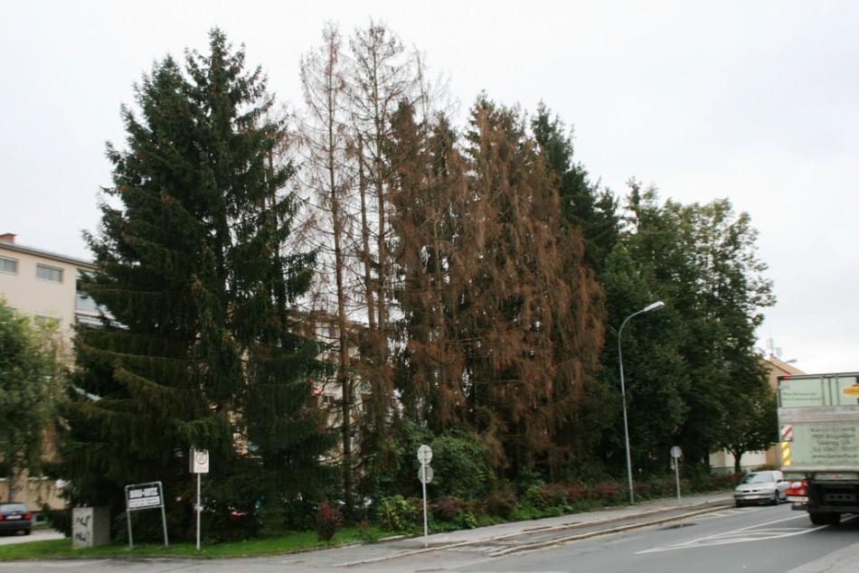 Abgestorbene Bäume sind Gefahr für Bevölkerung