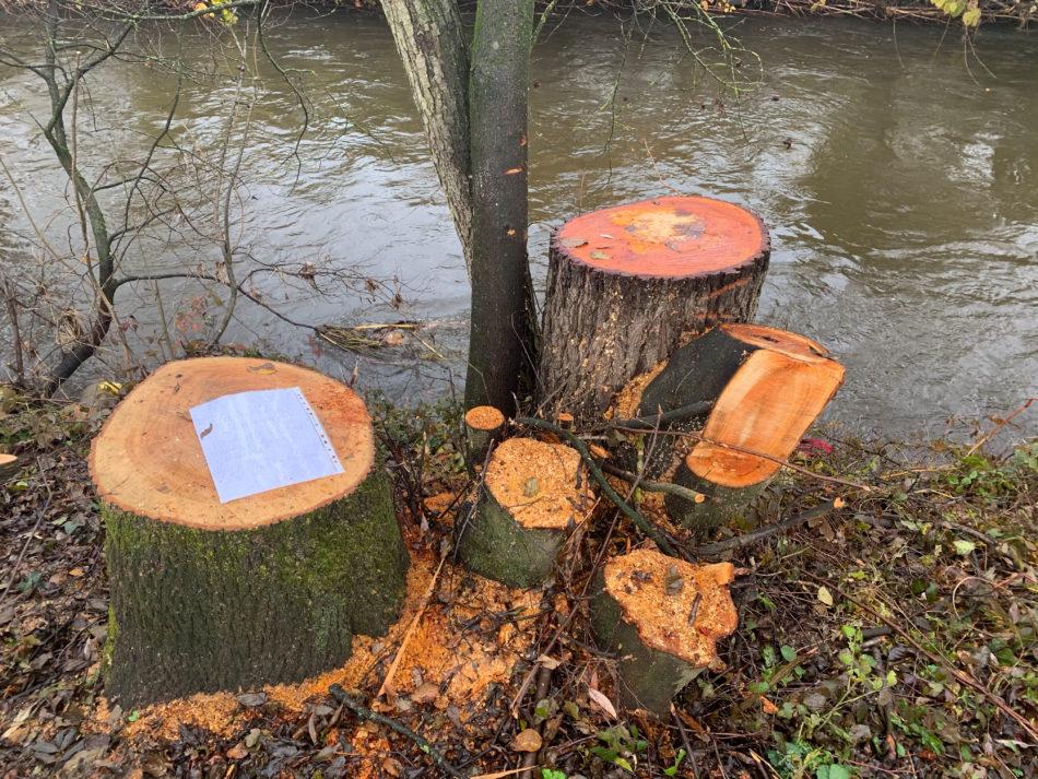 An eine Baumschutzverordnung wäre auch das Land Kärnten gebunden